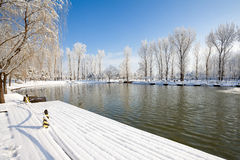 Winter scenic of a lake with snow covered trees. Royalty Free Stock Images