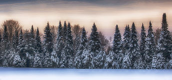 Winter scenic landscape Stock Image