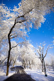 Winter scenic of a road with snow covered trees. Stock Photos
