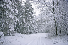 Winter Scenic Seasonal Road. This was taken on a seasonal road in Michigan's northern lower peninsula in the winter.  The trees are spruce and and maple.  Both Royalty Free Stock Photography