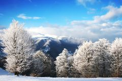 Winter Scenics Stock Photos