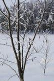 Winter schön Stockfotografie