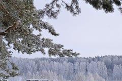 Winter schön Lizenzfreie Stockfotografie