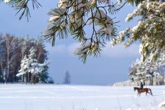 Winter schön Lizenzfreies Stockbild
