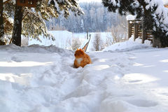 Winter schön Stockfoto