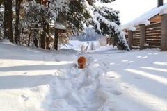 Winter schön Lizenzfreies Stockfoto