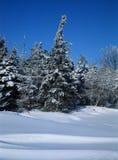 Winter-Schnappschuß Stockbilder