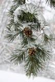 Winter-Schnee Lizenzfreie Stockfotos