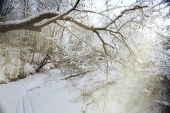 Winter, Schnee auf den Niederlassungen eines Baums, Lizenzfreies Stockfoto