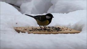Winter, Schnee, Fütterungsplatz für wilde Vögel stock video