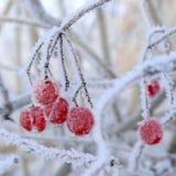 Winter Schnee-Kugelbaum Lizenzfreies Stockbild