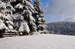 Winter-Schnee-Landschaftswald Stockfoto