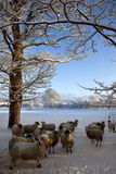 Winter-Schnee - North Yorkshire - Vereinigtes Königreich Stockfoto