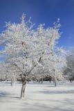 Winter, Schnee und Eis deckten Bäume, Park ab Lizenzfreies Stockfoto