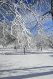 Winter, Schnee und Eis deckten Bäume, Park ab Stockfotografie
