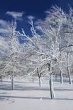 Winter, Schnee und Eis deckten Bäume, Park ab Lizenzfreie Stockbilder