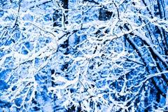 Winter-Schnee-Wald 12 Lizenzfreies Stockfoto