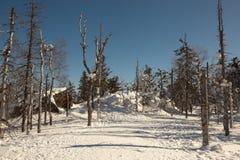 Winter, schneebedeckter Wald auf dem Gipfel von Berg-Weiß Nizhny Tagil Russland Stockfotografie