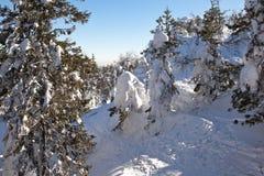 Winter, schneebedeckter Wald auf dem Gipfel von Berg-Weiß Nizhny Tagil Russland Stockbilder