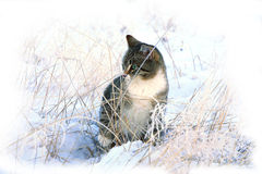 Winter, Schneekatze. stockfoto