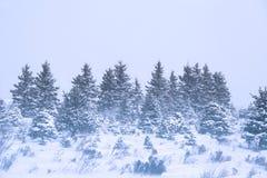 Winter-Schneesturm Stockfotografie