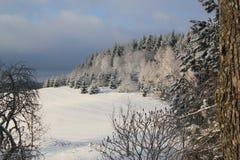 Winter-schneiende Tanne Forest Landscape Lizenzfreie Stockfotografie