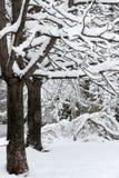 Winter Schwere Schneefälle während des Winters in der Stadt Herbst Kühles Wetter Lizenzfreies Stockbild