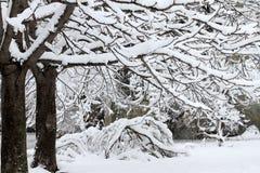 Winter Schwere Schneefälle während des Winters in der Stadt Herbst Kühles Wetter Lizenzfreie Stockfotografie