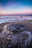 Winter sea, Baltic sea. Winter sea coast in Tallinn, Baltic sea stock photos