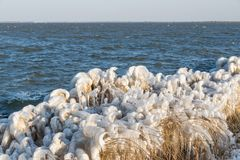 Winter sea landscape with reed covered in ice. The Netherlands Stock Images