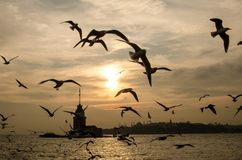 Winter seagulls silhouettes Stock Photography