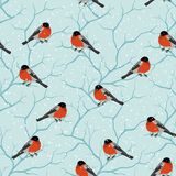 Winter seamless pattern. Birds on a tree in Royalty Free Stock Photos