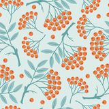 Winter seamless pattern with stylized rowan Stock Image