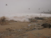 Winter seascape scenery with seagulls and waves Royalty Free Stock Photography