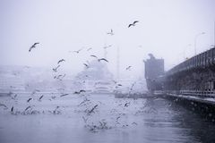 Winter seascape view of Popular New Mosgue and Galata Bridge Royalty Free Stock Photos