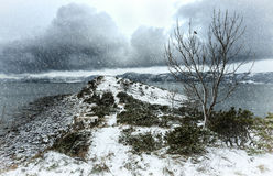 Winter seashore landscape Royalty Free Stock Photo