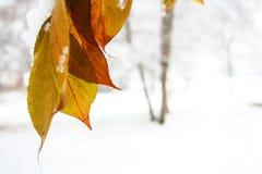 winter season Royalty Free Stock Image