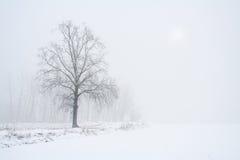 Winter season Stock Image