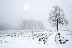 Winter season Stock Photography