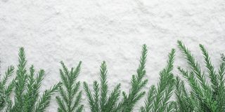 Winter season,christmas concepts ideas with pine tree and snow royalty free stock images