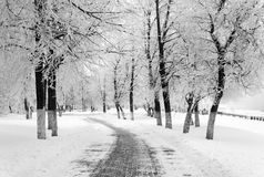 Winter season in city Stock Images