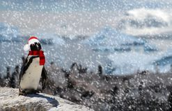 Winter season concept a funny penguin standing on a rock wearing a santa claus hat and scarf while snowing and a family of penguin. A Winter season concept a stock photography