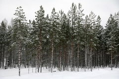 Winter season in Forest Stock Photography