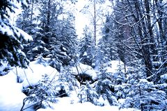 Winter Season in forest Royalty Free Stock Image