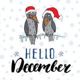 Winter season lettering quote hello december. Hand drawn doodle birds on frozen tree branch in traditional red hats. Vector illust Royalty Free Stock Image