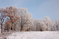 Winter season in Lower Silesia Stock Image