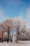 Winter season in Lower Silesia Royalty Free Stock Photography