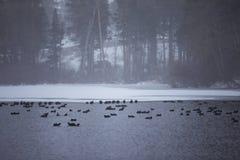 Winter season at Mammoth lake, California= royalty free stock image