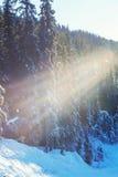 Winter season Stock Photo