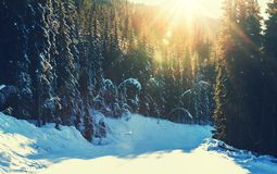 Winter season Royalty Free Stock Photo